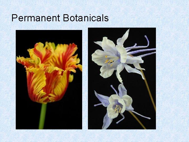 Permanent Botanicals