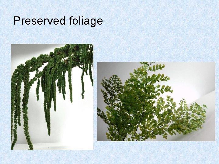Preserved foliage