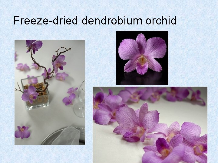 Freeze-dried dendrobium orchid