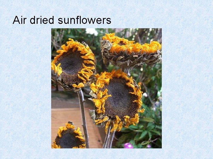 Air dried sunflowers
