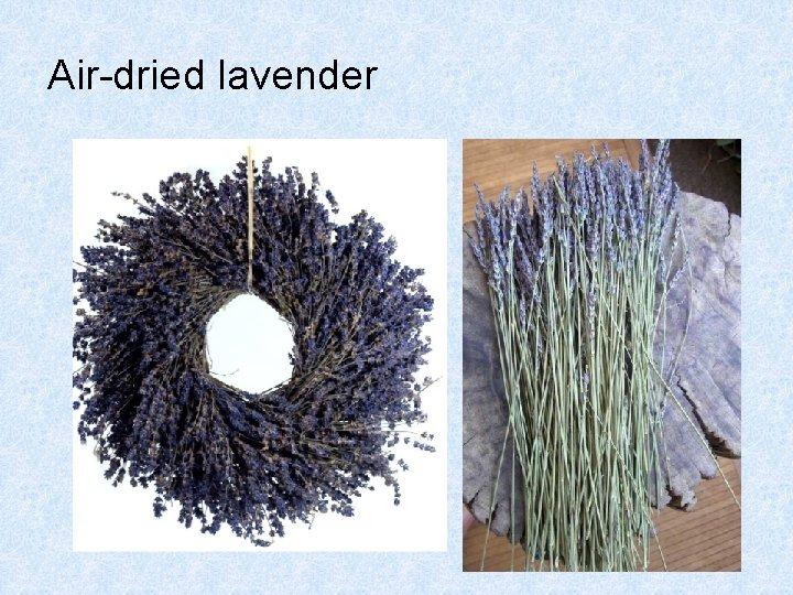 Air-dried lavender