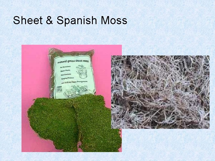 Sheet & Spanish Moss