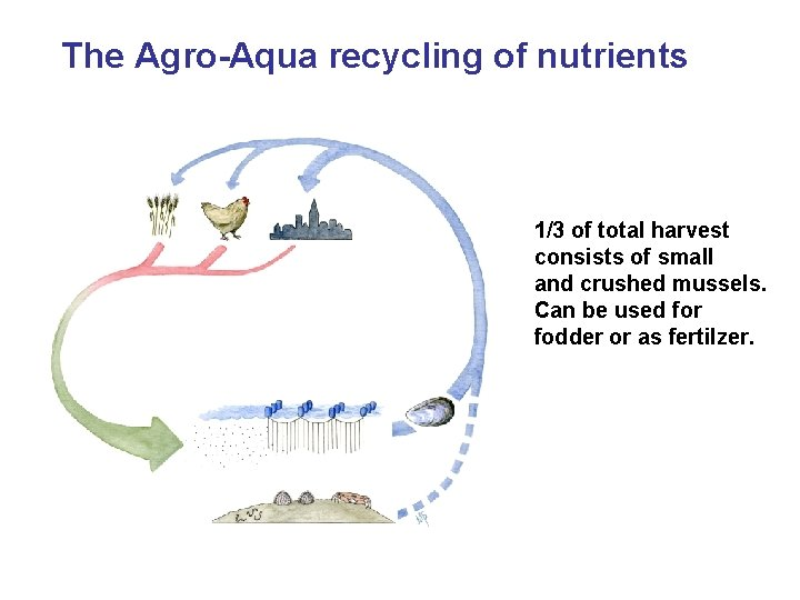 The Agro-Aqua recycling of nutrients 1/3 of total harvest consists of small and crushed