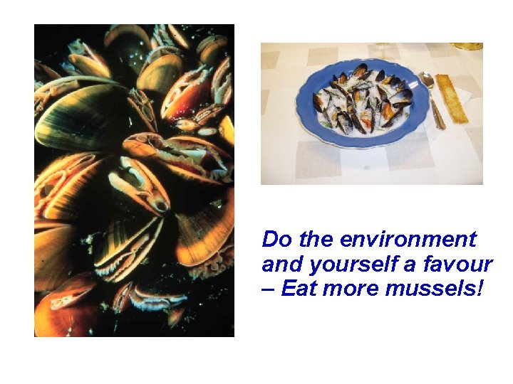 Do the environment and yourself a favour – Eat more mussels!