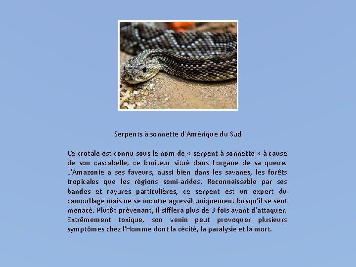 Serpents à sonnette d'Amérique du Sud Ce crotale est connu sous le nom de
