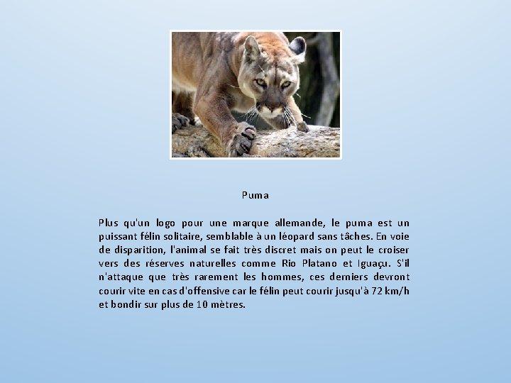 Puma Plus qu'un logo pour une marque allemande, le puma est un puissant félin