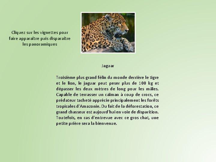 Cliquez sur les vignettes pour faire apparaître puis disparaître les panoramiques Jaguar Troisième plus