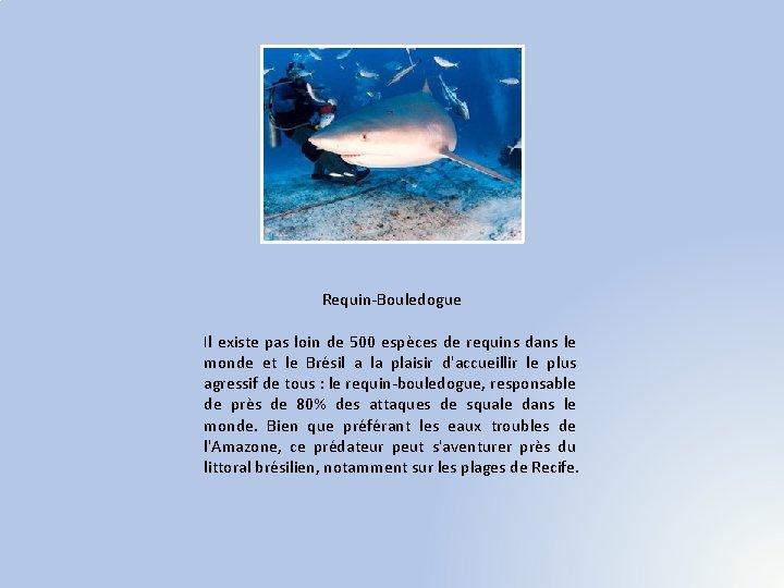 Requin-Bouledogue Il existe pas loin de 500 espèces de requins dans le monde et