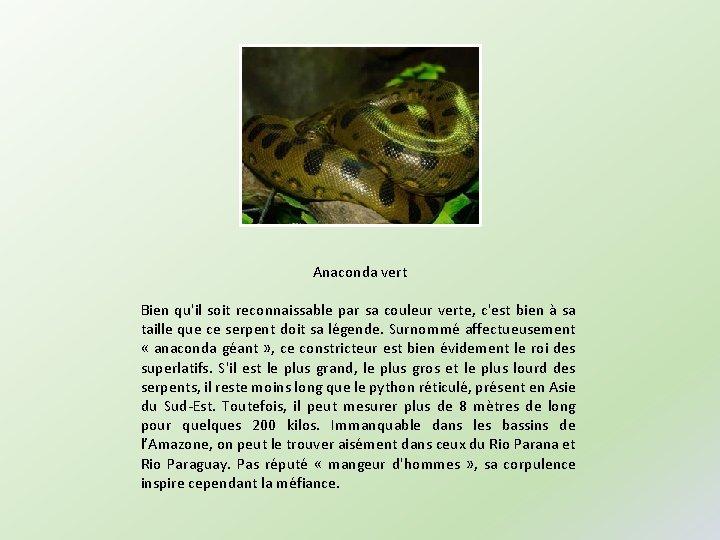 Anaconda vert Bien qu'il soit reconnaissable par sa couleur verte, c'est bien à sa