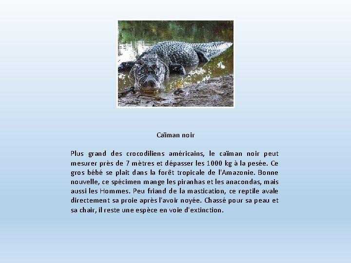 Caïman noir Plus grand des crocodiliens américains, le caïman noir peut mesurer près de
