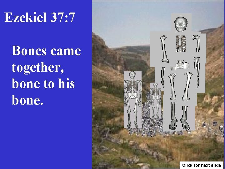 Ezekiel 37: 7 Bones came together, bone to his bone. Click for next slide