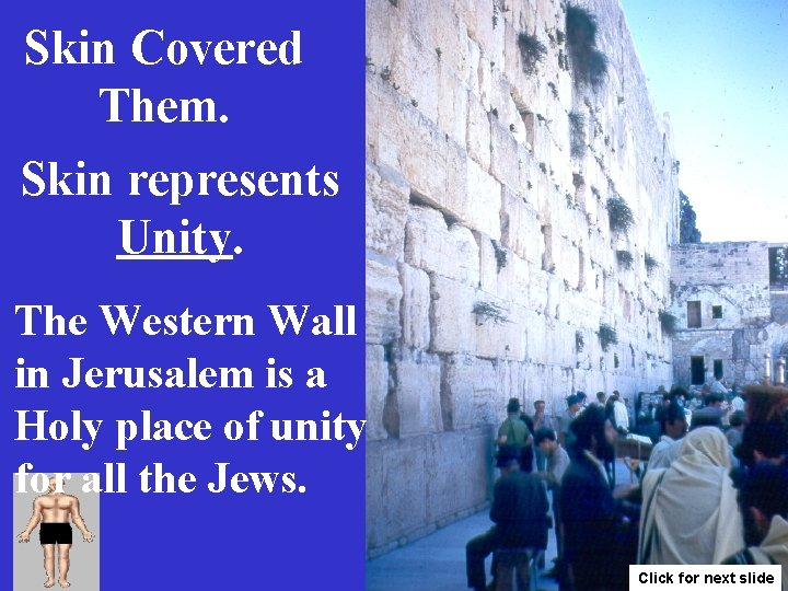 Skin Covered Them. Skin represents Unity. The Western Wall in Jerusalem is a Holy
