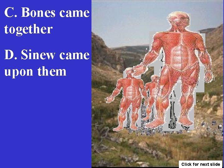C. Bones came together D. Sinew came upon them Click for next slide