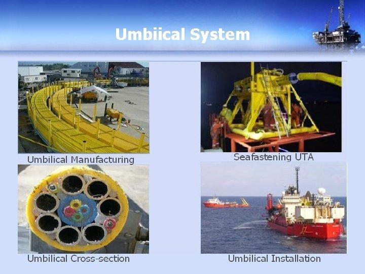 Umbiical System