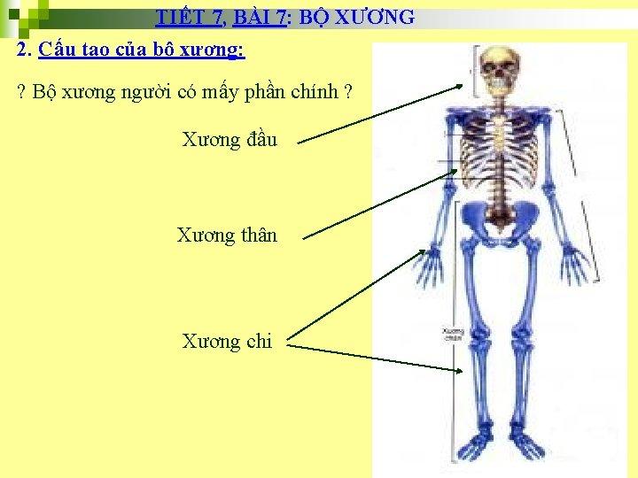 TIẾT 7, BÀI 7: BỘ XƯƠNG 2. Cấu tạo của bộ xương: ? Bộ