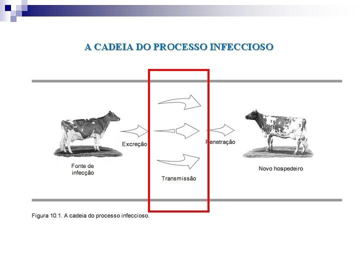 A CADEIA DO PROCESSO INFECCIOSO