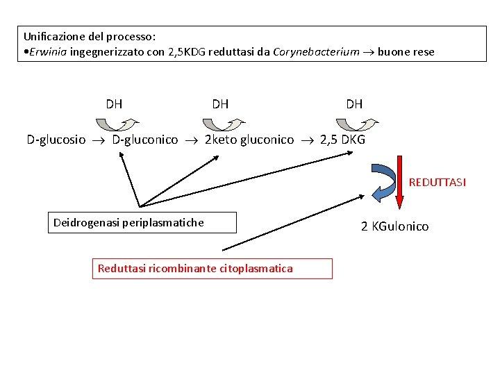 Unificazione del processo: • Erwinia ingegnerizzato con 2, 5 KDG reduttasi da Corynebacterium buone
