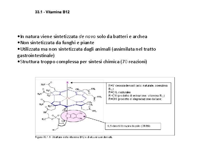 • In natura viene sintetizzata de novo solo da batteri e archea •