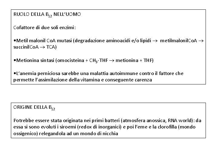 RUOLO DELLA B 12 NELL'UOMO Cofattore di due soli enzimi: • Metil malonil Co.