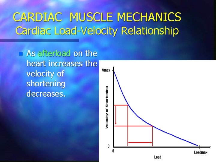 CARDIAC MUSCLE MECHANICS Cardiac Load-Velocity Relationship n As afterload on the heart increases the