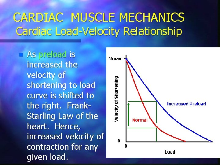 CARDIAC MUSCLE MECHANICS Cardiac Load-Velocity Relationship n As preload is increased the velocity of