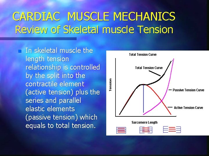 CARDIAC MUSCLE MECHANICS Review of Skeletal muscle Tension n In skeletal muscle the length