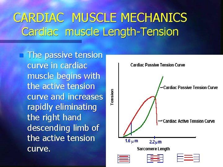 CARDIAC MUSCLE MECHANICS Cardiac muscle Length-Tension n The passive tension curve in cardiac muscle