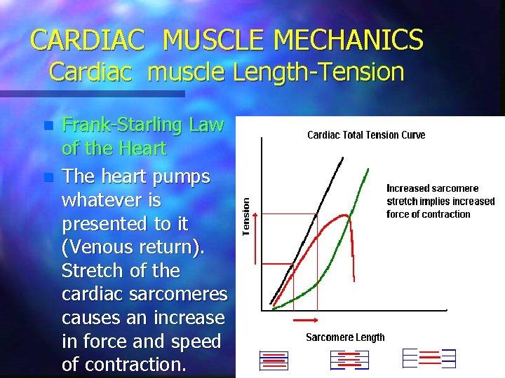 CARDIAC MUSCLE MECHANICS Cardiac muscle Length-Tension n n Frank-Starling Law of the Heart The