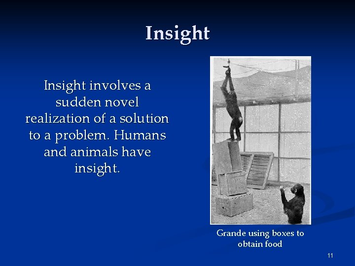 Insight involves a sudden novel realization of a solution to a problem. Humans and
