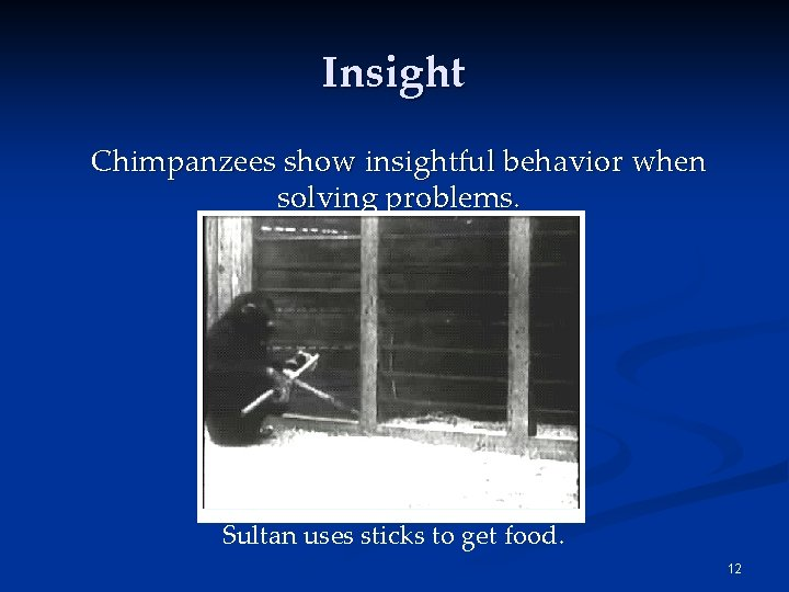 Insight Chimpanzees show insightful behavior when solving problems. Sultan uses sticks to get food.