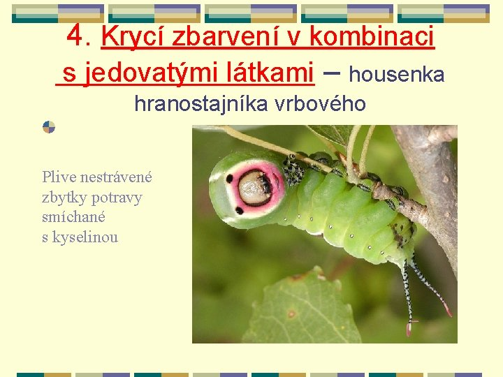 4. Krycí zbarvení v kombinaci s jedovatými látkami – housenka hranostajníka vrbového Plive nestrávené