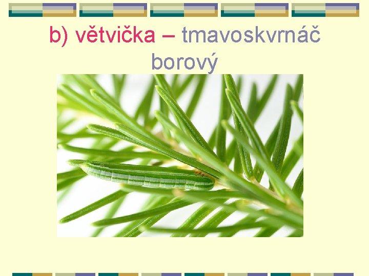 b) větvička – tmavoskvrnáč borový