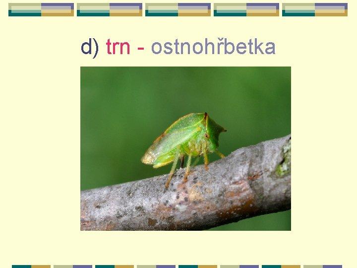 d) trn - ostnohřbetka