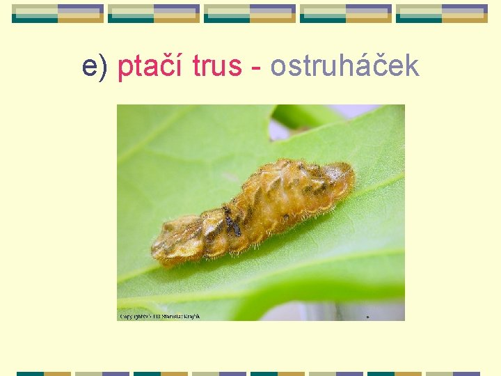 e) ptačí trus - ostruháček