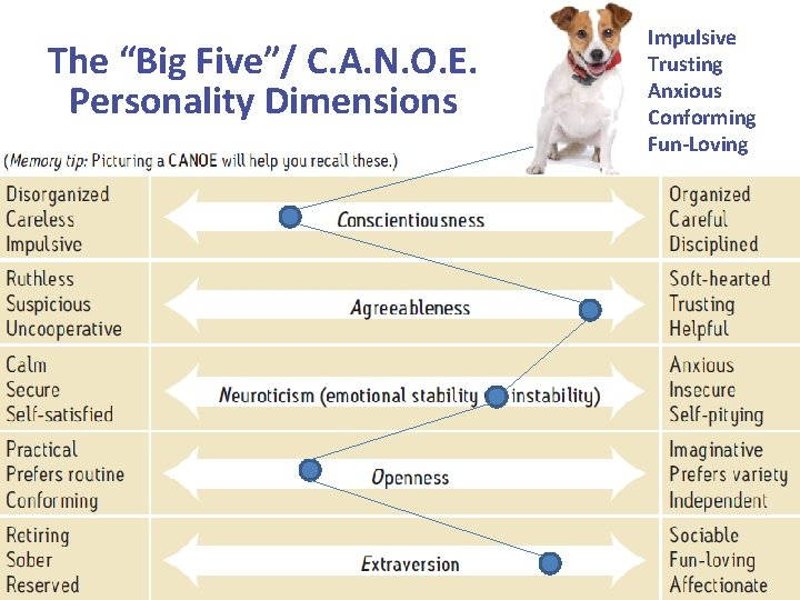 """The """"Big Five""""/ C. A. N. O. E. Personality Dimensions Impulsive Trusting Anxious Conforming"""