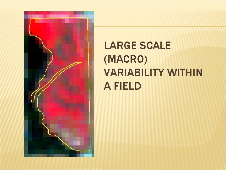 LARGE SCALE (MACRO) VARIABILITY WITHIN A FIELD