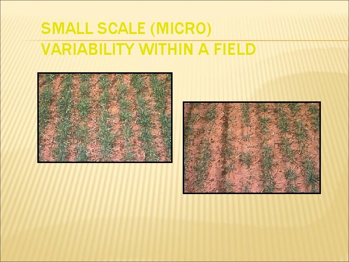SMALL SCALE (MICRO) VARIABILITY WITHIN A FIELD