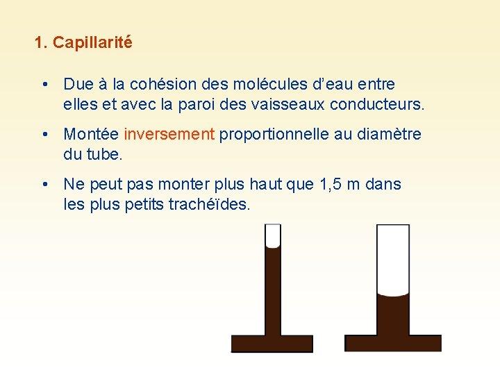 1. Capillarité • Due à la cohésion des molécules d'eau entre elles et avec