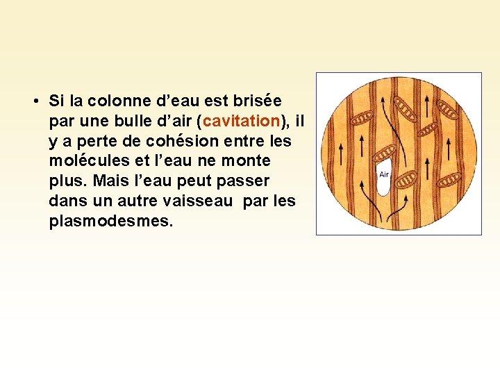 • Si la colonne d'eau est brisée par une bulle d'air (cavitation), il