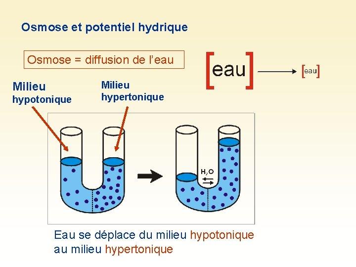 Osmose et potentiel hydrique Osmose = diffusion de l'eau Milieu hypotonique Milieu hypertonique Eau
