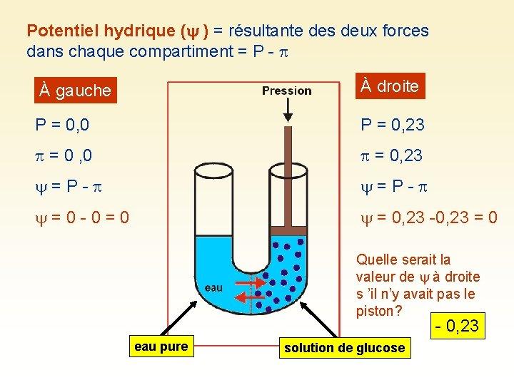 Potentiel hydrique ( ) = résultante des deux forces dans chaque compartiment = P