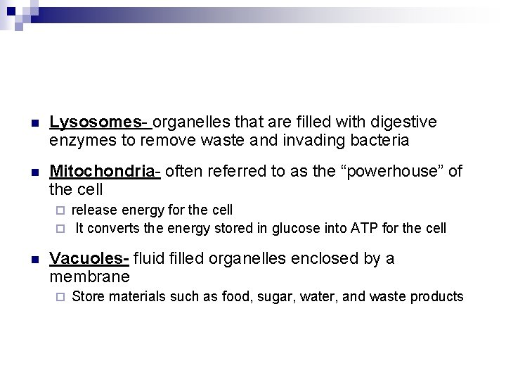 n Lysosomes- organelles that are filled with digestive enzymes to remove waste and invading