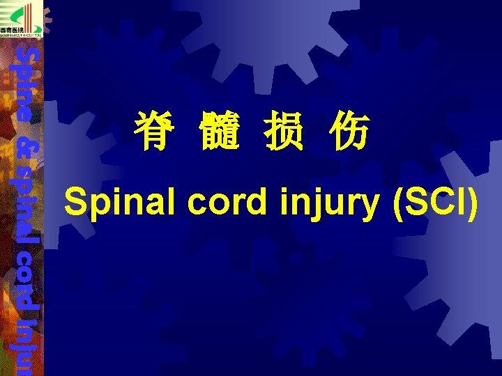 Spine & spinal cord injur 脊 髓 损 伤 Spinal cord injury (SCI)