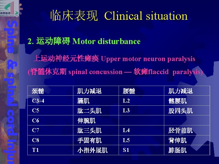 Spine & spinal cord injur 临床表现 Clinical situation 2. 运动障碍 Motor disturbance 上运动神经元性瘫痪 Upper