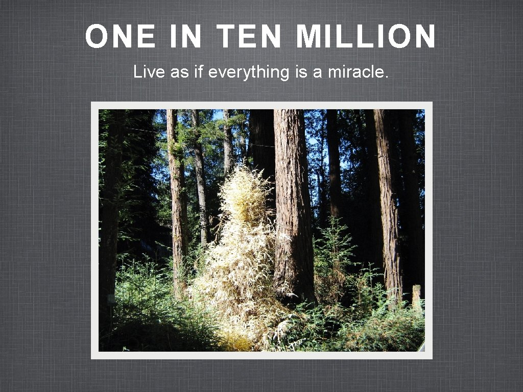 ONE IN TEN MILLION Live as if everything is a miracle.