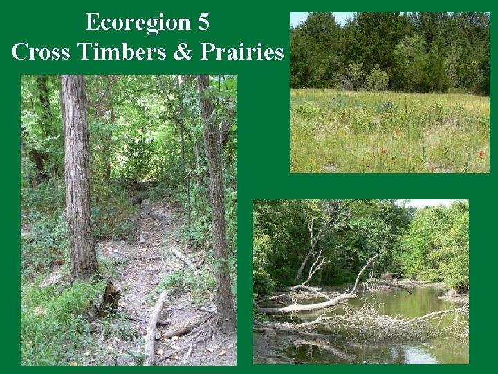 Ecoregion 5 Cross Timbers & Prairies