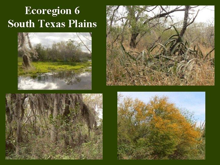Ecoregion 6 South Texas Plains