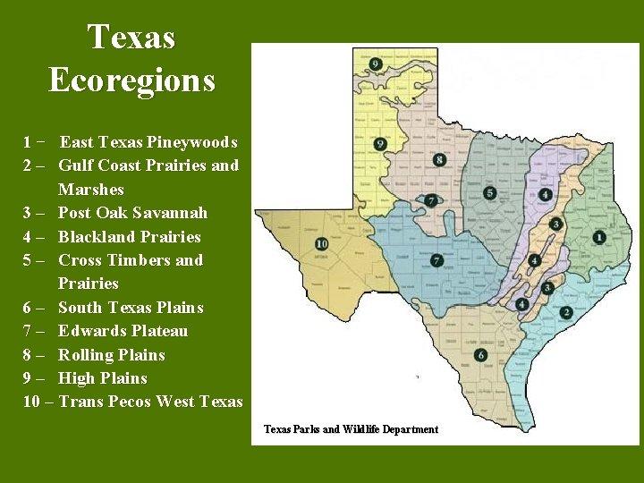 Texas Ecoregions 1 − East Texas Pineywoods 2 – Gulf Coast Prairies and Marshes
