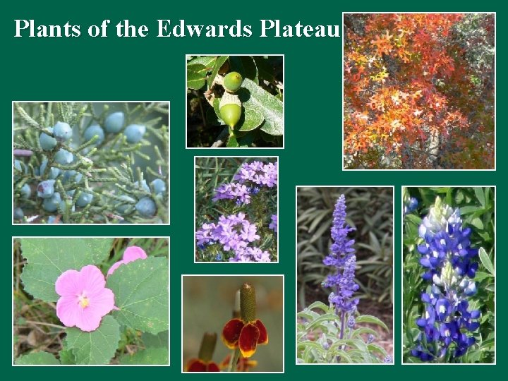 Plants of the Edwards Plateau