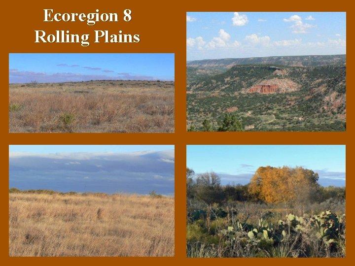 Ecoregion 8 Rolling Plains